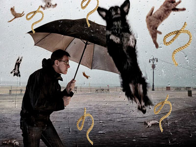 It's raining cats and dogs... and cords !